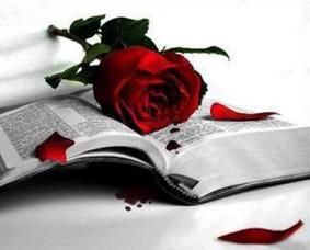 roses-i-llibre