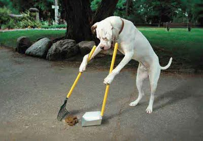 perro-limpiando-excrementos1_2