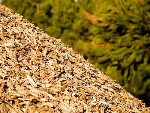 biomassa_floresta