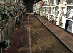 thumb cementiri doma
